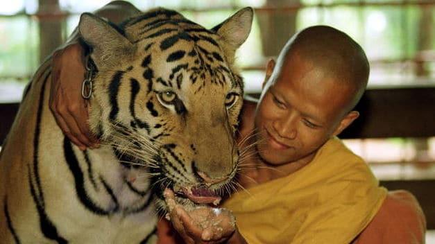 El aporte del Budismo a la reflexión Bioética sobre la situación de los animales en Occidente
