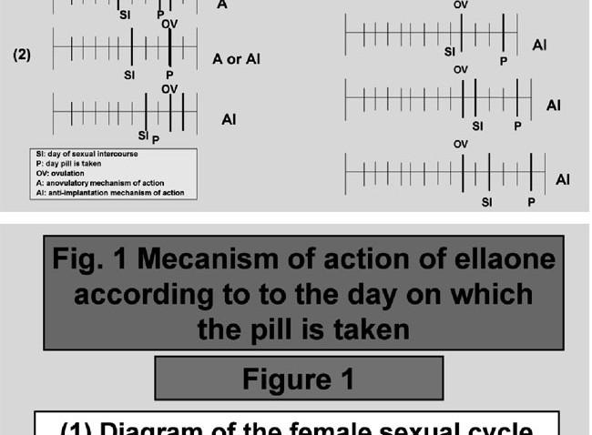 Ulipristal acetato, un contraceptivo de emergencia ( EllaOne)