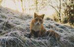 A la búsqueda de una tradición de respeto hacia los animales en el pensamiento de occidente. Breve recorrido histórico