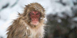 mono mirando